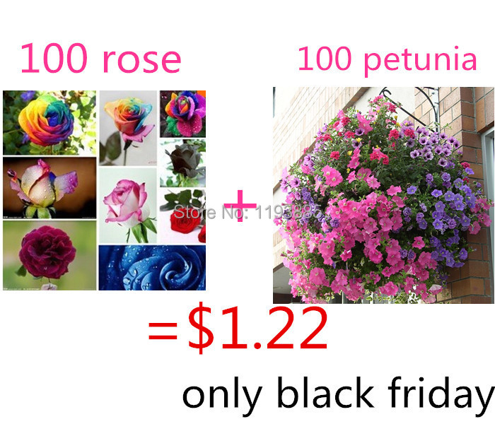 $1.22 get 100 rainbow rose seeds mixed colors and 100 handing petunia seeds very rare seeds for black friday as gift