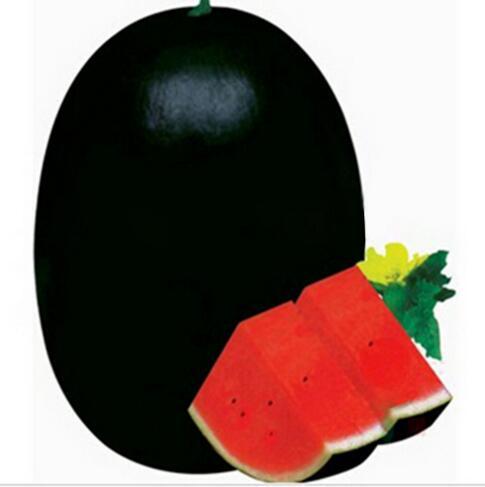 20 PCS Giant Watermelon Seeds Black Tyrant King Super Sweet Watermelon Home Gardening