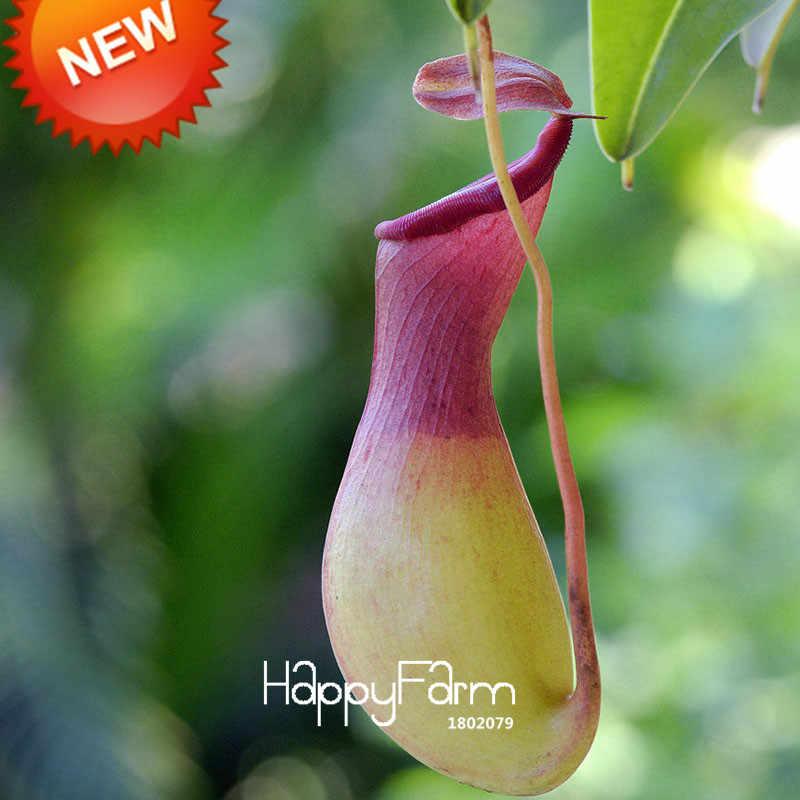 Горячая Распродажа! Зеленые Nepenthes насекомоядные растения садовые бонсай из цветов едят комаров сортов Флорес 50 частиц/мешок, # V5B40T