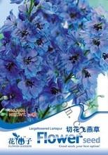 Delphinum grandiflorum Семена, оригинальной Упаковке 50 шт. Сад бонсай Цветок семена larkspur, легко Расти Consolida ajacis
