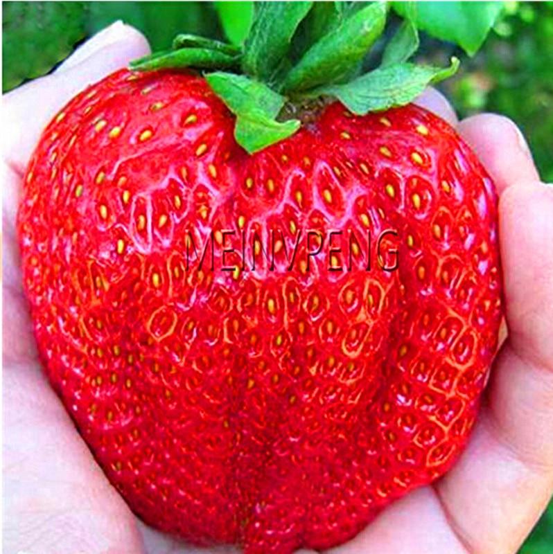 Hot Sale!Giant Japan Strawberry Seeds, 100Pcs Giant Red Strawberry Organic Seeds Garden,#WYN8DK