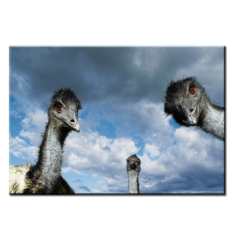 Dp Artisan Ostrich Wall Painting Print On Canvas For Home Decor Oil Painting Arts No Framed