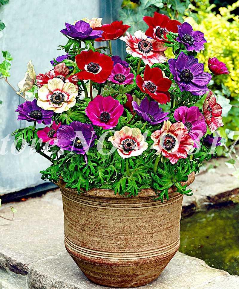 200 шт./пакет смешанные Anemone цветок Свадебные украшения дома Букет Редкие Flore завод горшках подарок для дома сад де Флорес Декор