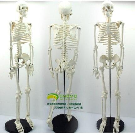 Free Shipping Medical Standard 85cm Human Body Skeleton Model Manikin