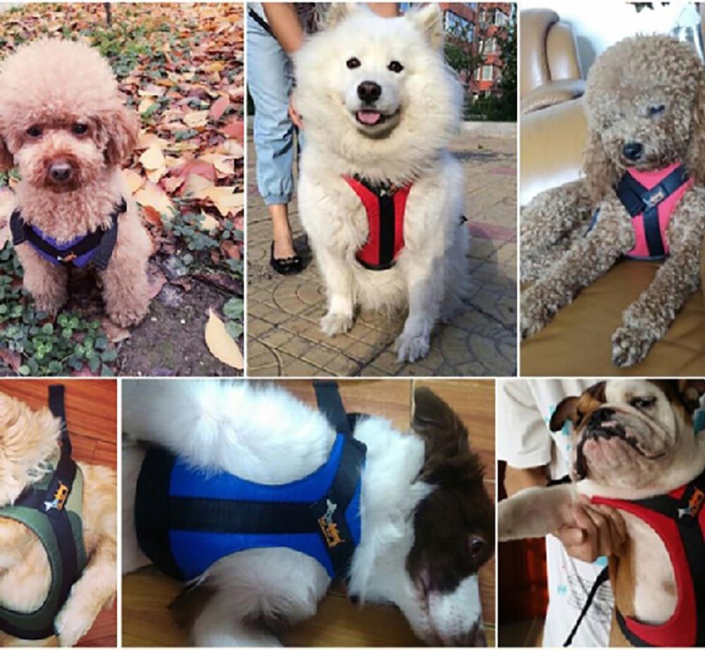 Hipidog Soft Padded Justerbar Hållbar Utomhus Hund Valp Nylon Mesh - Produkter för djur - Foto 3