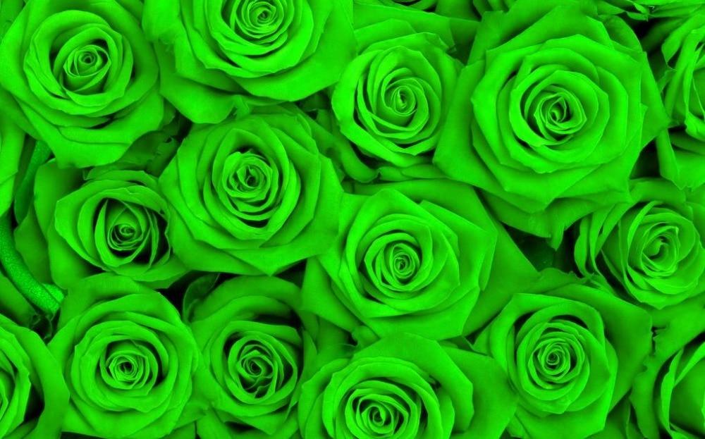 Papel Parede Mural Wallpaper Green Rose 3d Wallpaper