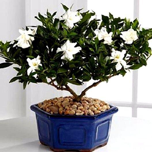 White Flowering House Plants online buy wholesale house plants white flowers from china house