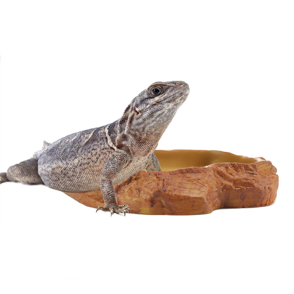 1pcs Reptile Tortoise Water Dish Food Bowl Toy For Amphibians Gecko ...