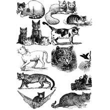 Unduh 95+  Gambar Kucing Dan Sketsanya Imut