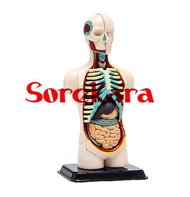 Human Anatomical Mini Body Integral Skeleton Organ Skin Medical Teach Model School Hospital vivid anatomical skin block model enlarged skin section model human skin model