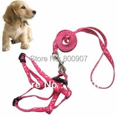 Собака мелких пород с принтом кости и лапы поводок и жгут