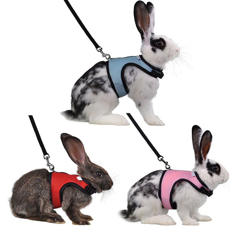 4 colores conejo hámster arnés del Animal doméstico con Set plomo Ferret Guinea Pig pequeño Animal mascota caminar Leash plomo conejito pequeña mascotas XS-L