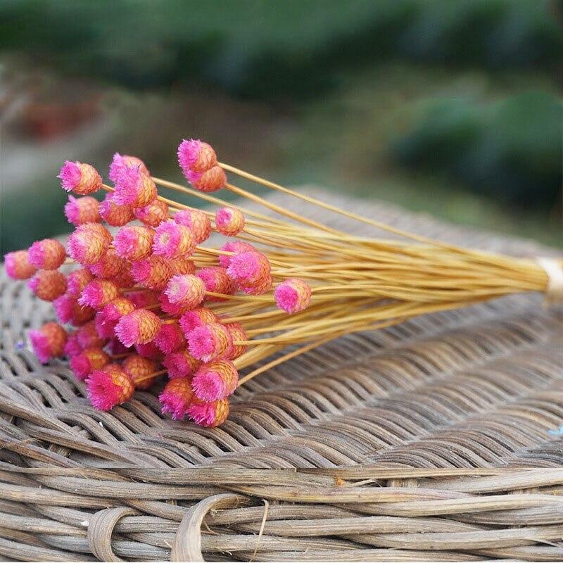 50 unids / lote decoración para el hogar ramo de flores secas flores - Para fiestas y celebraciones - foto 6