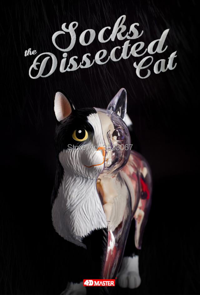 4d Master Visionthe Dissected Cat Funny Anatomy Model Medical Human