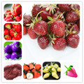 100pcs Climbing Strawberry bonsai Tree plant 100% True Indoor Organic Very Delicious Fruit plant For Home & Garden Bonsai plant