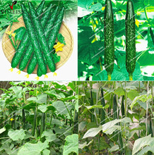 20pcs/bag Long cucumber seeds,Chinese cucumb Organic vegetable Seeds Rare Fruit cucumbe seeds for home garden(China)
