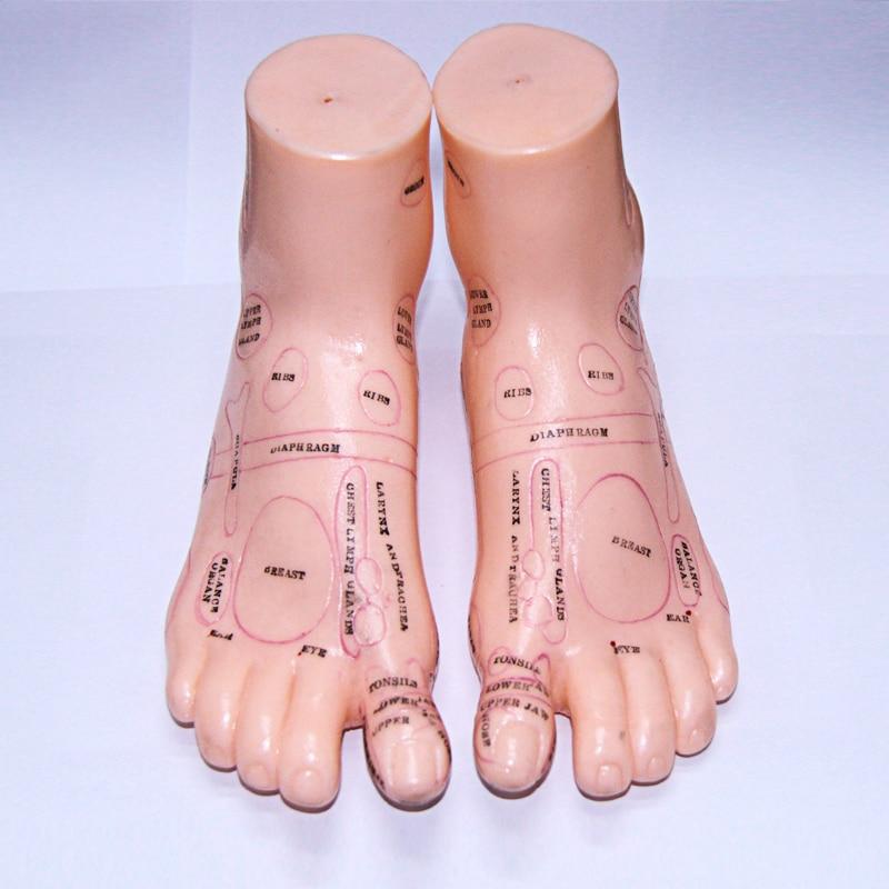 17cm Foot acupuncture model set foot acupuncture needle ...