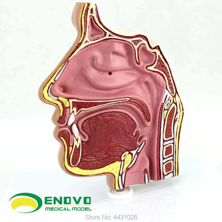 ENOVO Các mũi nội soi thủng của mũi và thanh quản của các mũi và thanh quản của cơ thể con người y học