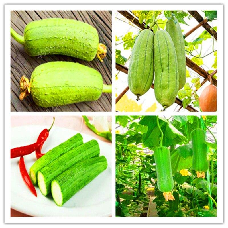 10pcs Loofah Luffa Cylindrica Angular Towel Gourd Long Luffa Organic Vegetable For Home Garden Plants Easy To Grow Free Shipping