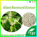 Alta Qualidade Gigante Knotweed Extrato Resveratrol Capsule 500 mg * 300 pcs