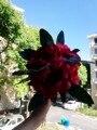 Шелковые Свадебные цветы сад букет украшение для дома цветы подружки невесты букеты розы Гортензия Свадебный букет