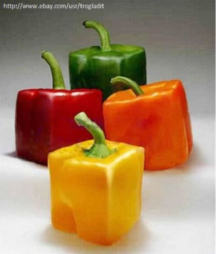 100 Piece Square Sweet Pepper Vegetable High Budding Rate Fast Growth