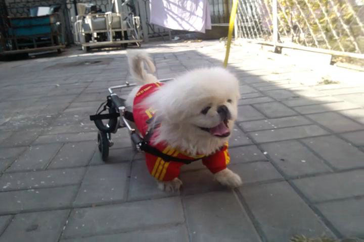 Dog font b wheelchair b font font b disabled b font font b disabled b font