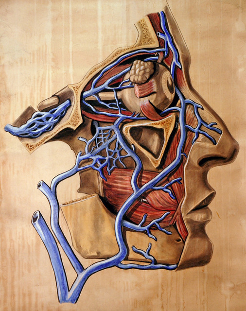 Human Anatomy Blood vessel face Anatomical Chart Classic Insignia Canvas  Paintings Vintage Wall Posters Stickers Home