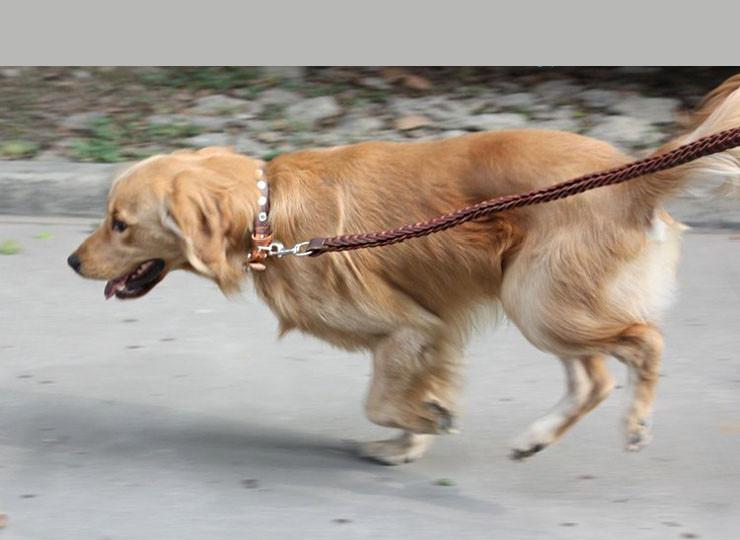 large dog leash (7)