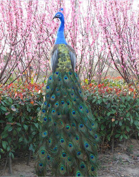 Имитация павлина огромный 150 см красочные перья павлина твердая модель сценический реквизит ремесленные украшения для дома и сада подарок
