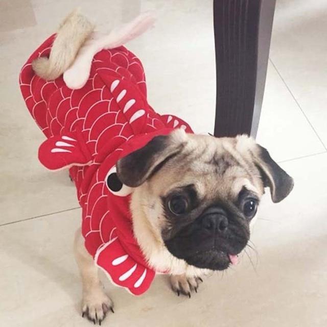 US $9 98 28% OFF|Vui Halloween pet cat dog Fish goldfish costume cosplay  quần áo mùa đông ấm con chó con chó nhỏ yorkie áo khoác áo khoác quần áo