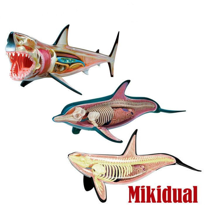 Educational 4D DIY Master Toys for Children Cool Skelekon Anatomy mkd2 Fish Action Figure Ocean Animals Shark Dophin Whale