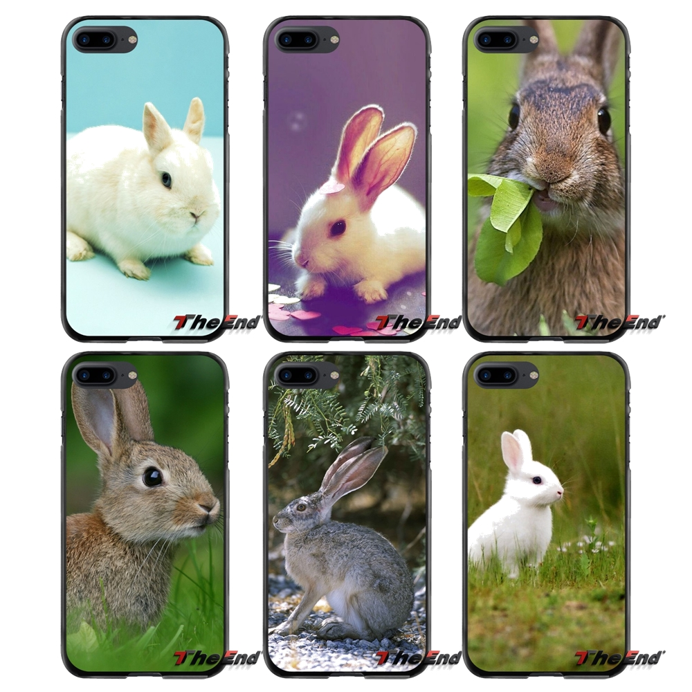 Rabbit Animal Pet For Apple iPhone 4 4S 5 5S 5C SE 6 6S 7 8 Plus X iPod Touch 4 5 6 Accessories Phone Cases Covers