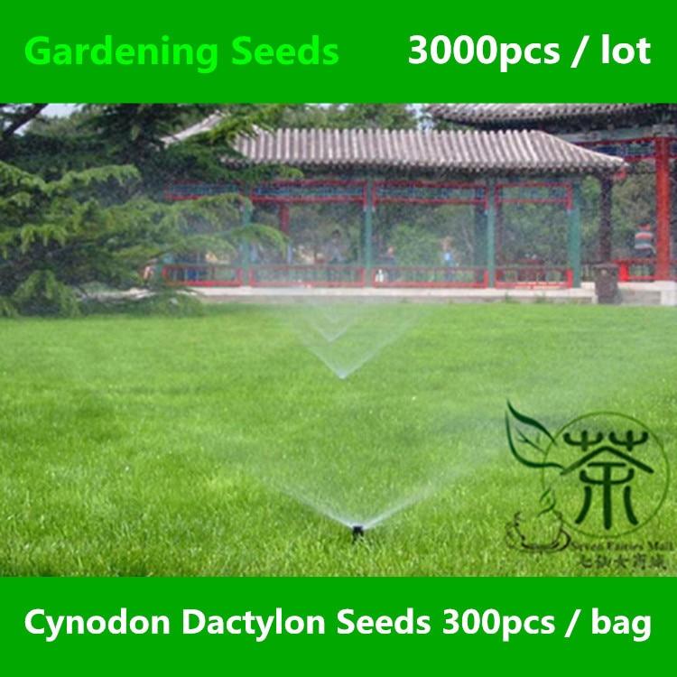 Bermuda seed grass reviews online shopping bermuda seed for Gardening express reviews