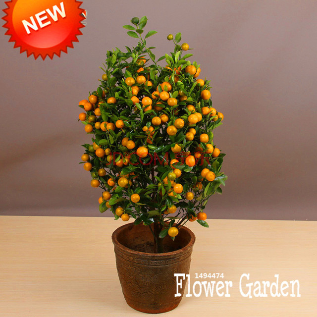 Sale!100Seed/Lot Balcony Patio Potted Fruit Trees Planted Seeds Kumquat  Seeds Orange Seeds