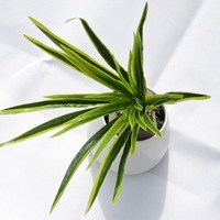 Latex 4pcs x 30 leaf artificial grass orchid plant branch tree wedding home wall furniture decor.jpg 200x200