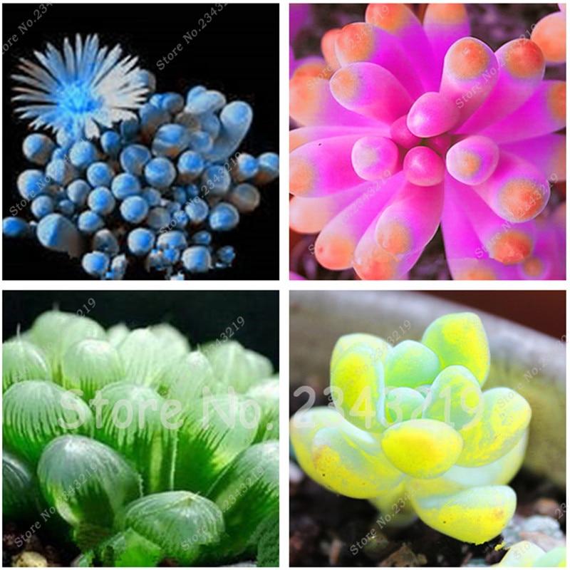 Bonsai Plant 200 Mix Succulent seeds lotus Lithops Pseudotruncatella Bonsai plants Seeds for home & garden Flower pots planters