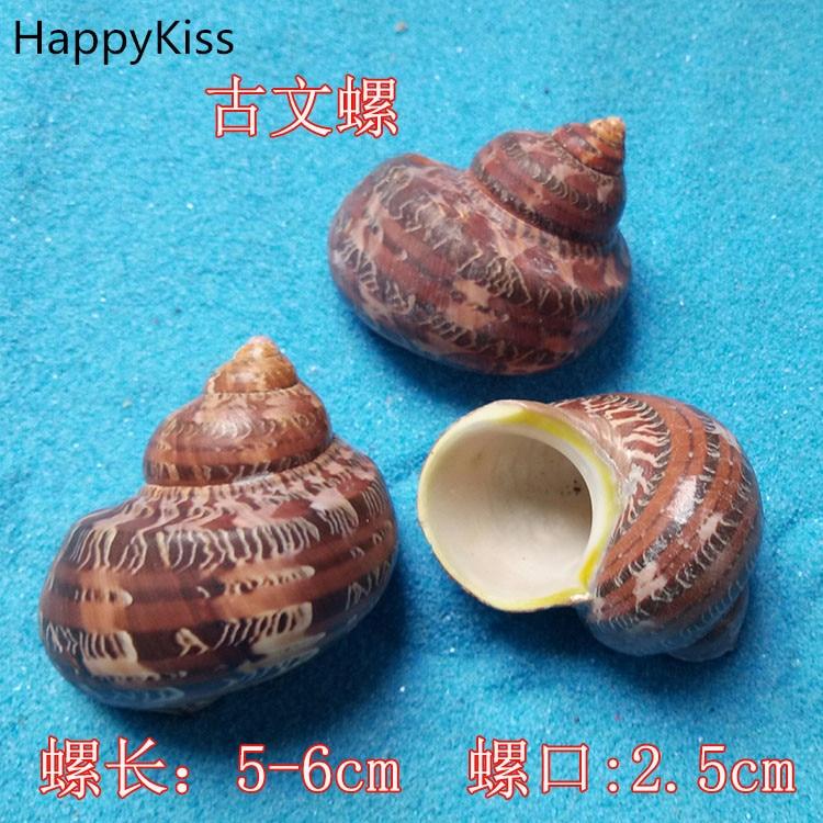 2pcs /lot Natural Seashells Crafts To Stick The Wedding Party Conch Big Natural Shells 5-6cm Home Decoration