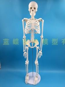 Image 2 - 85 سنتيمتر قالب هيكل عظمي نموذج الإنسان مع العضلات العمود الفقري نظام العصب التدريس الطبي معدات تعليمية هيكل عظمي نموذج تشريح