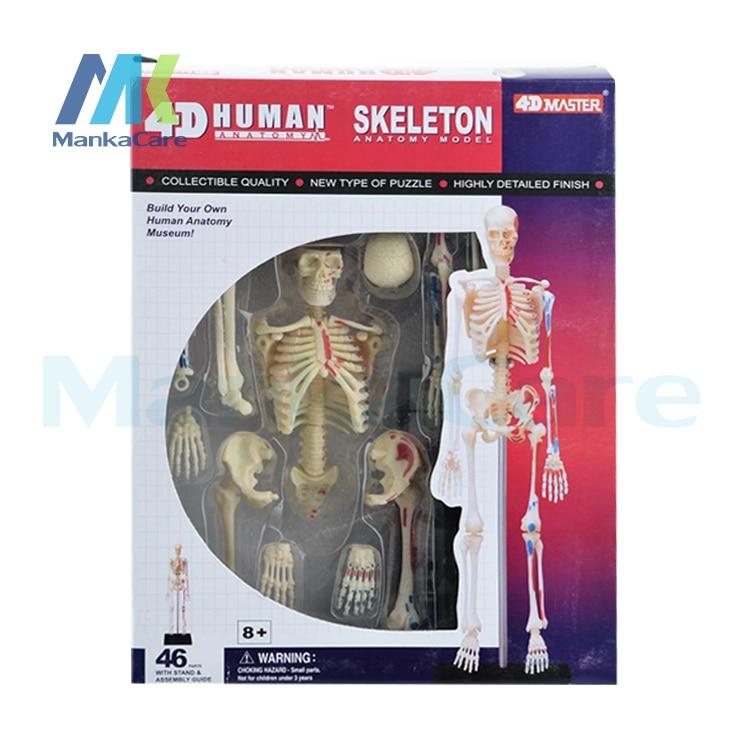 4D MASTER Human 46pcs assembled set toy skeleton model whole body bone bwl 01 tyrannosaurus dinosaur skeleton model excavation archaeology toy kit white
