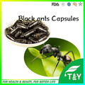 sexual enhancement 10:1 bulk black ant extract capsules 500mg*300pcs/lot