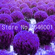Big Sale!50pcs Juniper bonsai tree potted flowers office bonsai purify the air absorb harmful gases juniper garden free shipping