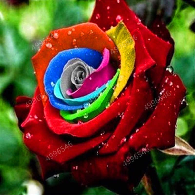 200 قطعة أزهار نادرة من Holland بألوان قوس قزح ورود بونساي حديقة منزلية نبات زهور نادر زهور الورد بألوان قوس قزح ، شتلات زهور الورد