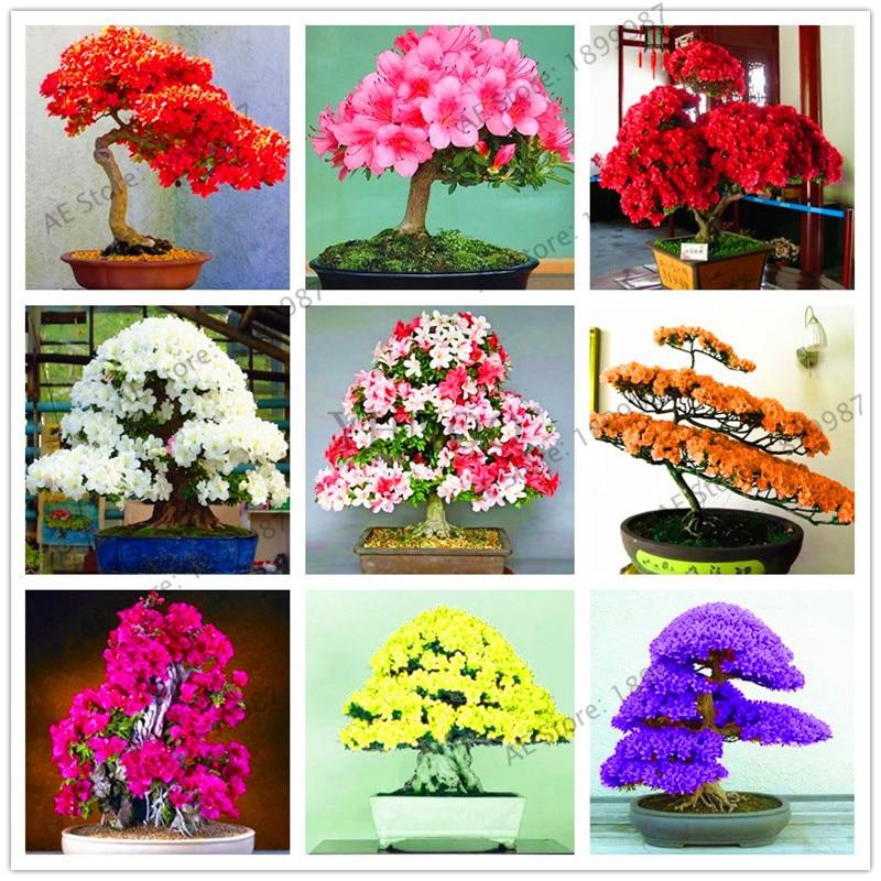 Садовые цветы растения 101 шт. белый и розовый Азалия плантас бонсай цветы DIY Лучший подарок для ребенка.