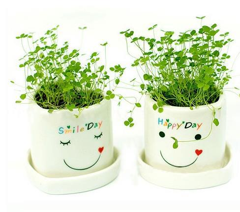 Flower Pots Planters Creative Green Potted Aerobic Plants