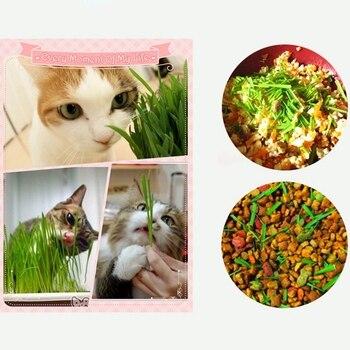 100% naturalne przekąski dla zwierząt domowych zabawka kryty nasiona trawy kota zestaw do uprawy specjalne kot zdrowe smakołyki zabawki-kot trawa, kocimiętka, krystaliczne błoto kulki