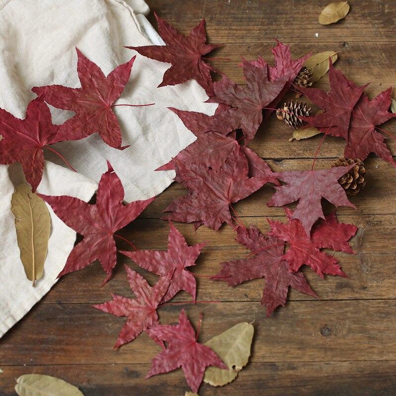Folha de bordo natural folhas secas outono outono outono folhagem cor original vermelho para fotografia adereços photo studio acessórios decoração