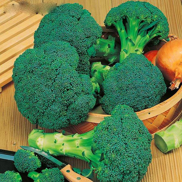 100pcs Cauliflower (brocoli) seeds Green Cauliflower Organic vegetable seed plant For home garden Non-gmo Seeds