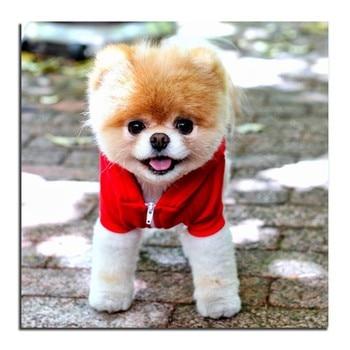 Алиэкспресс Иркутск - Full drill 5D DIY Diamond Painting Pet dog Embroidery Diamond Cross Stitch Rhinestone Mosaic Painting Home Decor  aliexpress shopping товары купить алиэкспресс