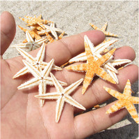 HappyKiss Freeshipping new 100pc/lot Natural Artificial Starfish Platform Ornament Accessories wedding decoration 3-5cm size
